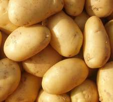 Fresh New Potato For Sale