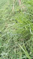 Hectares of land for sale at Epe