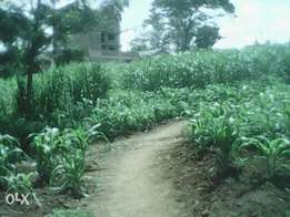One acre for sale along kamiti road