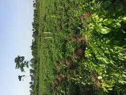 Farm Services​. Acres/Hectares of Farm land for lease!!!