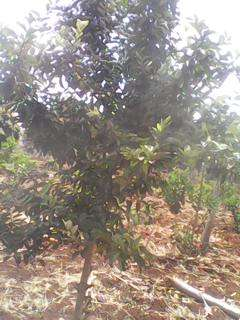 Sale of 5 acres at Rwika junction well developed Embu Town - image 5