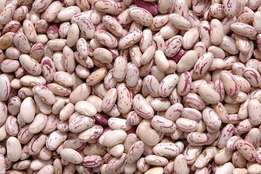 light speckled sugar beans, red beans