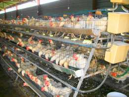 Chicken Layer Cages Weldex Steel Guard