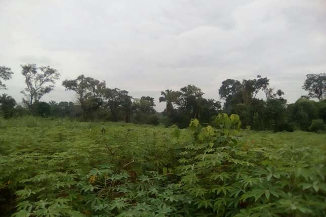 30plots of land located in Ugwuogo nike Enugu East Nigeria Enugu North - image 3