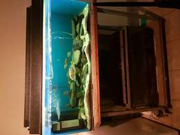 2 Fish tanks with stand and fish