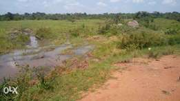 100acres of private millo land on sale in nakaseke each at 2,5m