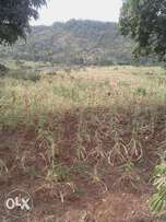 PRIME PLOTS for sale, located near muranga town, 50 by 100