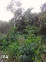 Genuine acres of land in Epe