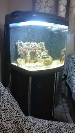 marine tank with breeding lair of clowns full setup Mitchell's Plain - image 5