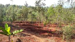 Quick Sale! 0.05Ha (over ⅛ Acre) behind Kianyaga Hospital, Kirinyaga.