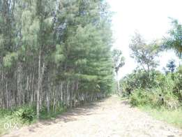 11 acres with casuarinas trees,msambweni