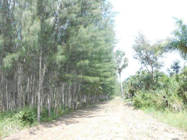 11 acres with casuarinas trees,msambweni Kwale - image 1