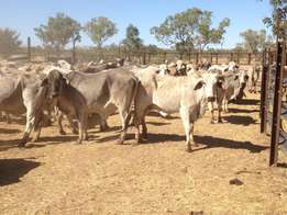 Farm guild, vaccination and best low price livestock sales