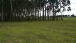 5 acres at kimumu /chebisaas with title