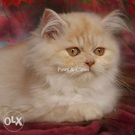 Handsome boy with amber eyes. Persian classics.
