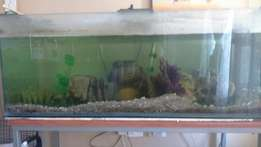 4 ft compete fish tank
