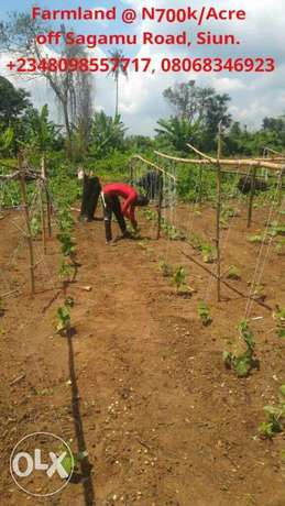 Cheap and affordable 3600sqm at N700k Farmland for sale in Abeokuta Ikeja - image 2