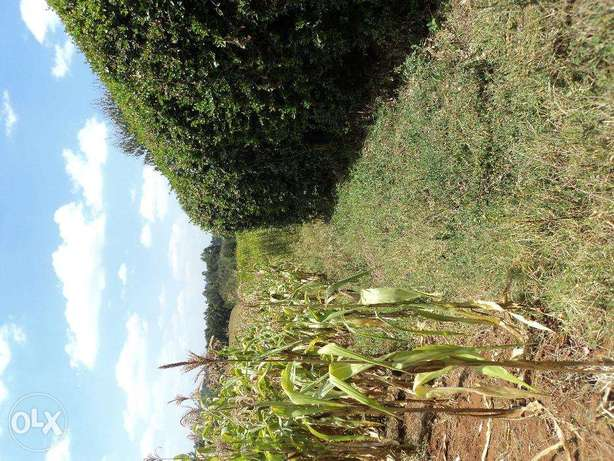 Chunga Mali 1 acre available for Sale Limuru - image 2