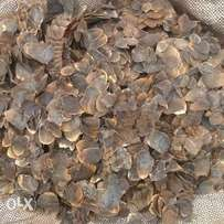 Pangolin shell for sale at affordable prize