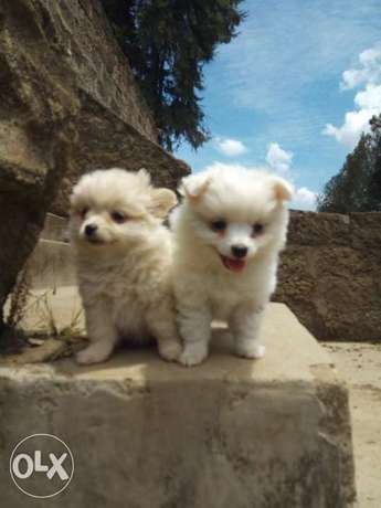 Adorable puppies. Karen - image 2