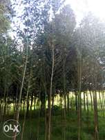 8 acres land at Ngorika 800m from nkr- olkalou rd.2m per acre