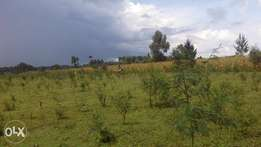 1/4 plot for Sale at Royalton Eldoret