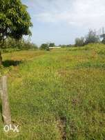 3/4 Acre Land for sale at Makuyu behind punda milia town with title