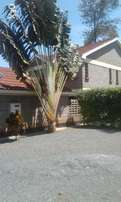 Executive 3 bedroom own compound to let