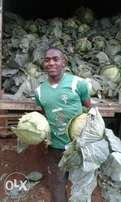 large quantity of cabbages for sale