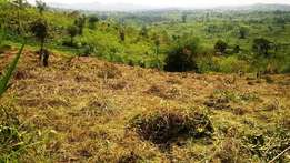 50 acres of land for sale in Bufunjo, Kyenjojo at 100 millions