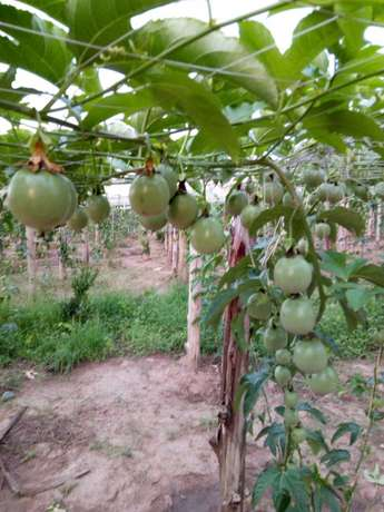 3.61 Acres of Agriculture Land for quick sale in wobulenzi at 8.5m onl Wakiso - image 2