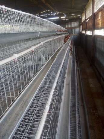 Homestead farm cages.capacity 1000 with free installation. Kasarani - image 4