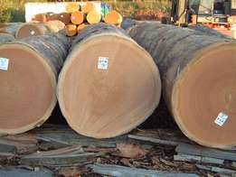 Logs and Wood from the Congo available for Sale