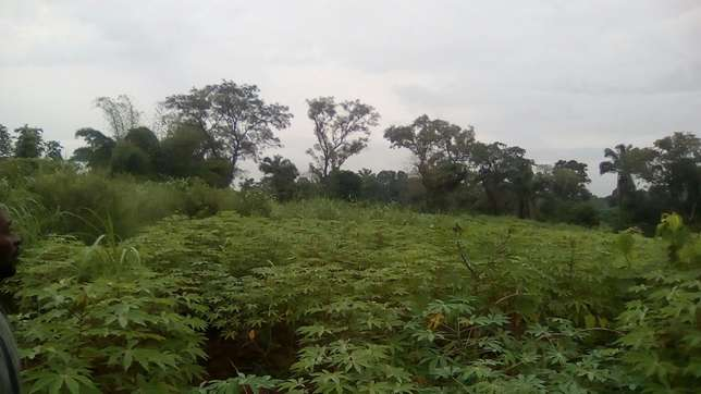 30plots of land located in Ugwuogo nike Enugu East Nigeria Enugu North - image 6