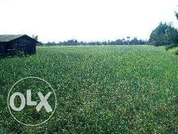 100 acres in timau