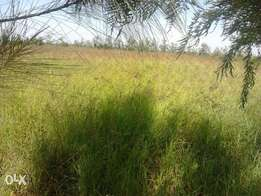 Muthaiga north 10 acres each at 95m, titled.