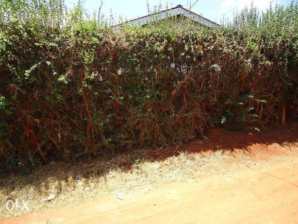 Thika Rd 3br hse on 2 1/8 plots (1/4) with titles ideal for redev. Nairobi CBD - image 2