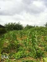 Cheap Land For Sale off Ofada Owode Road, Ogun State
