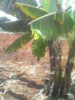 Sale of 5 acres at Rwika junction well developed Embu Town - image 4