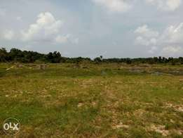 Hectares of plain land in FCT Abuja with C of O for sale