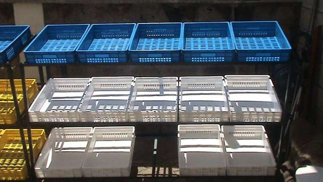 Grocery crates and shelves Syokimau - image 5