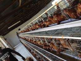chicken layer cage 3 tiers 96birds capacity FActory in china