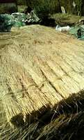 Thatching Grass for sale