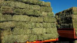 Lusern( alfalfa) bales for sale