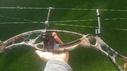 compound bow 80lb