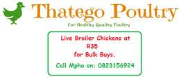 Live broiler Chickens for sale.