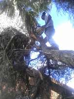 TREE FELLING , PRUNING , trimming and stump removal