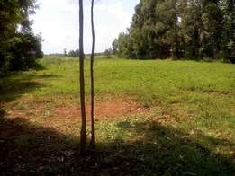 1/2 acre land near road in Sibembe area BGM in bungoma
