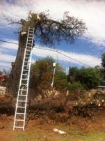 Dangerous Tree Felling and unwanted Tree Removal
