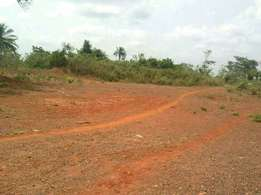 Amrahia land with documents for sale urgently.